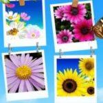 1308046821_1307565323_vesennij-kollazh-1024-768